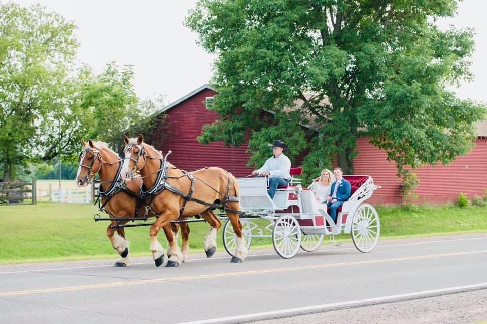 Vis-a-Vis carriage. Horse and carriage wedding.
