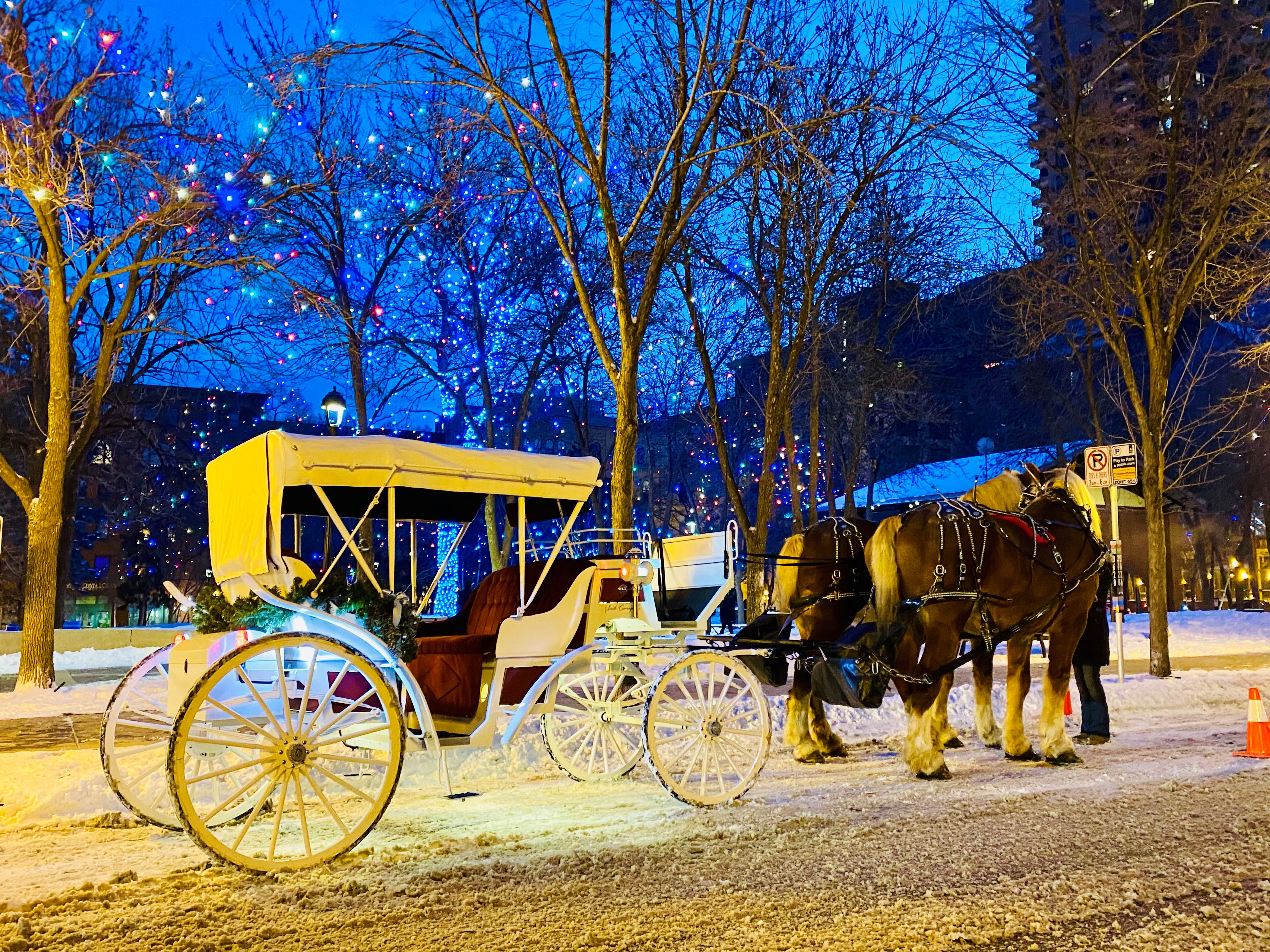 Horse and carriage Christmas wedding downtown St. Paul
